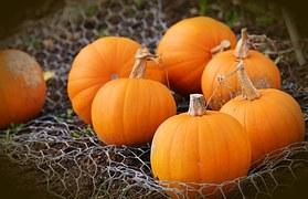 pumpkin-1679827__180